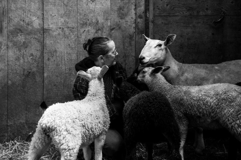 lidija and sheep